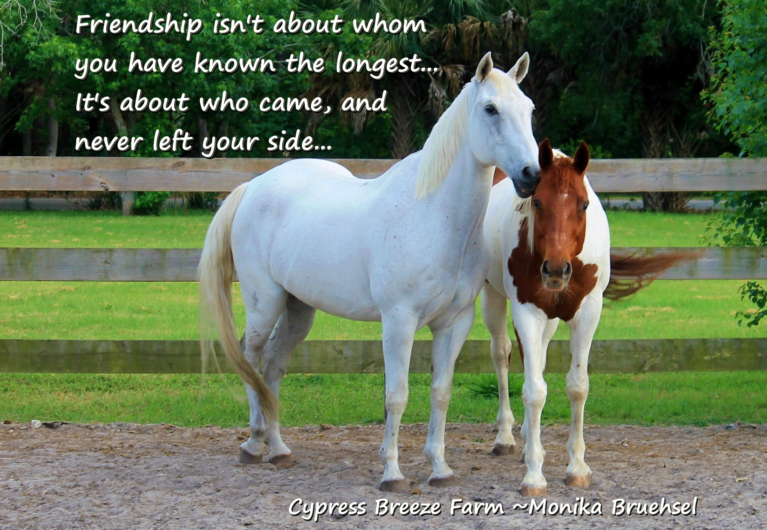 quotes about horses and friendship