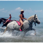 Beach Horse Back Riding and Swimming St Petersburg Clearwater