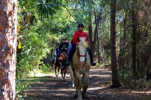 Pinellas Country Horseback riding Tours Clearwater St Petersburg