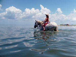 Ocean Horseback riding Swimming St Petersburg