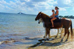 beach horseback rides tampa bay