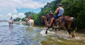 st petersburg florida beach horseback rides tampa bay