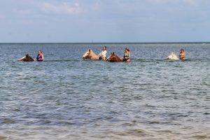 Beach horseback rides Sarasota, St Pete, Tampa, Clearwater