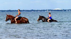 FLodia Horseback riding anventures