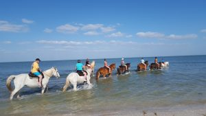 Florida Beach Horse back Rides St Petersburg - Copy