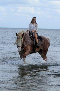 Florida Beach horseback rides