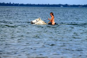 Swimming With Horses Tampa Bay florida
