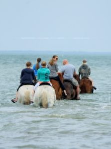Swimming with Horses St Petesburg
