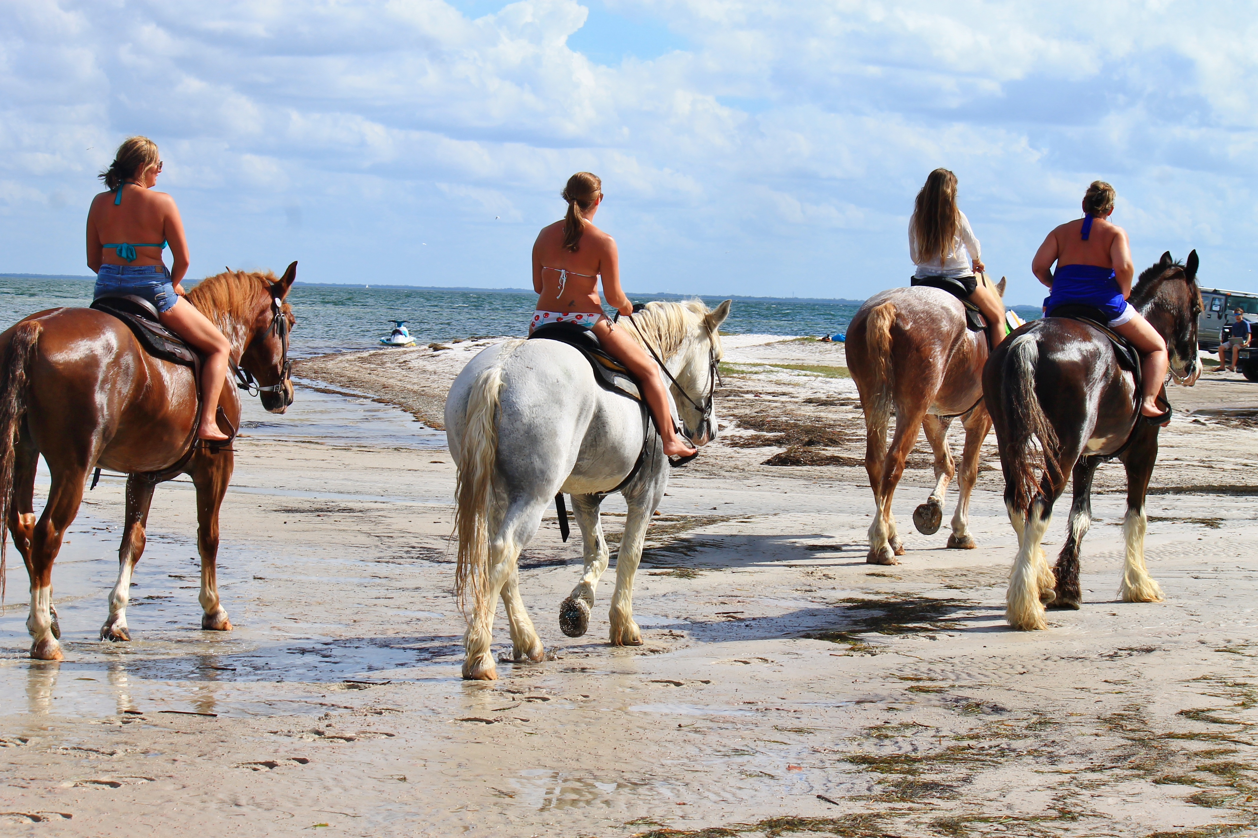 Beach Horseback Riding And Swimming With Horses In Tampa Bay St