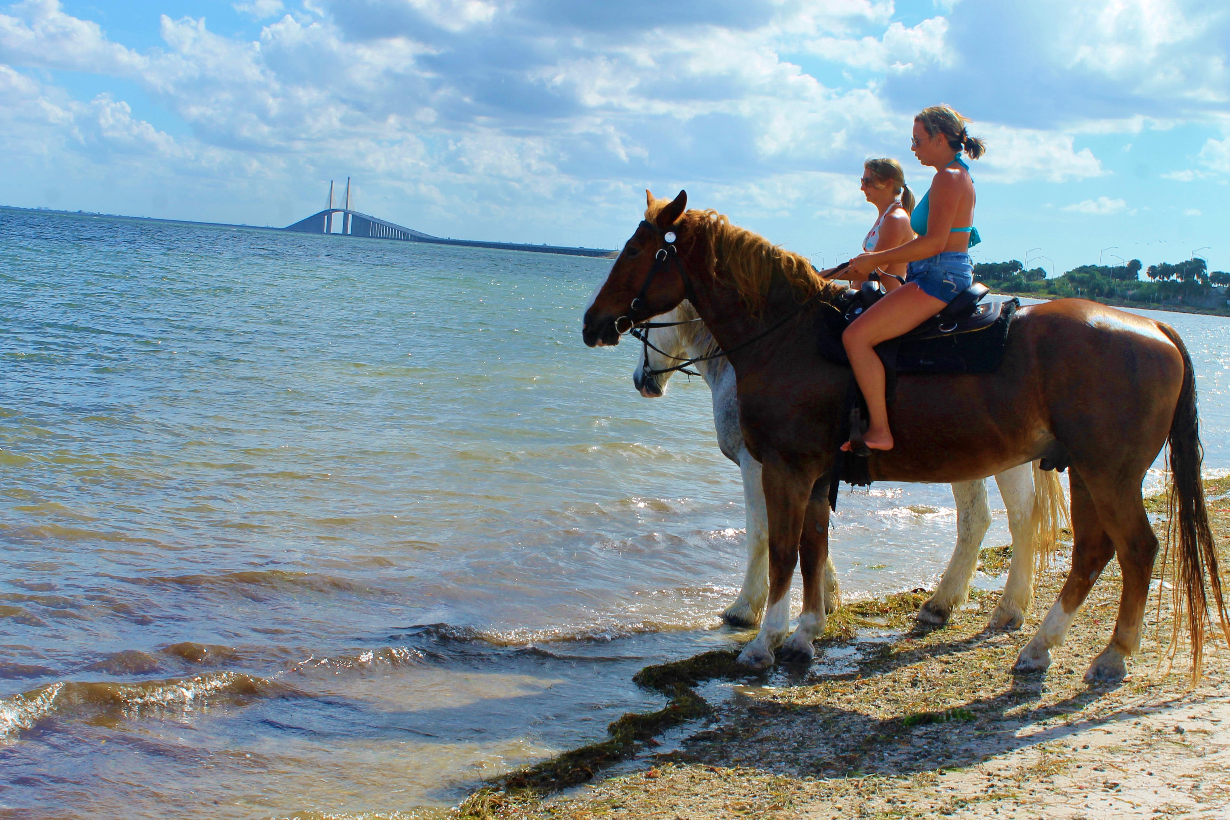 Beach Horseback Rides Tampa Bay Cypress Breeze Farm