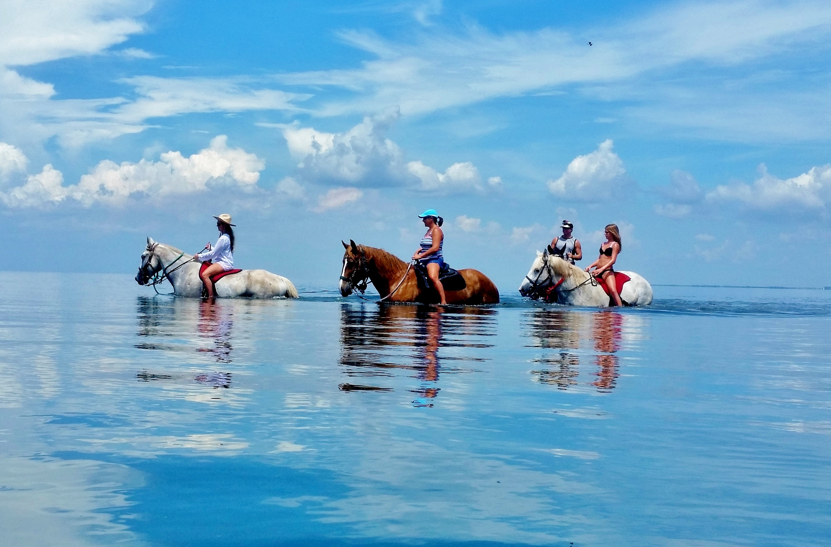 St Petersburg Fl Book Your Tampa Bay Horseback Ride Cypress Breeze Farm